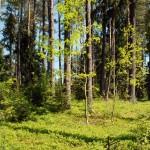 Park narodowy – dwie strony medalu