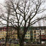 Spotkanie z profesorem w sprawie gołdapskich drzew