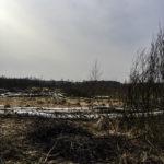 Tu ptak raczej nie zamieszka – czyli jak pan minister pojawił się w okolicy Gołdapi