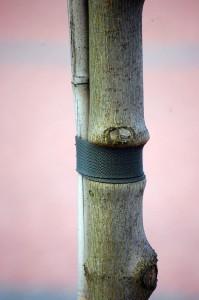 ucisnione_drzewko