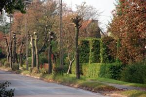 oglawianie_drzew
