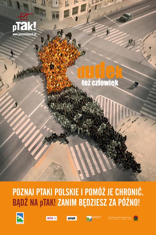 citylight_ptakipolskie_dudek_podglad