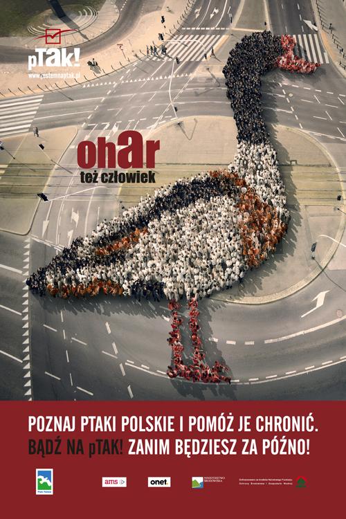 citylight_ptakipolskie_ohar_podglad