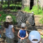 przedszkole_safari_8