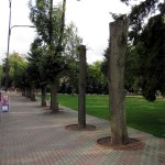 drzewa_4