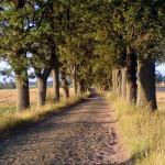 dzien_drzewa
