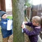 drzewo_34