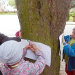 drzewo_35