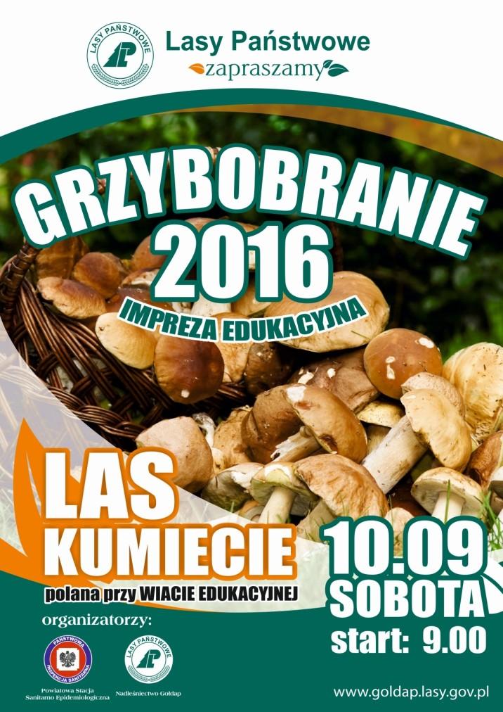 GRZYBOBRANIE 2016m