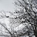 Internauci skarżą się na… ptaki