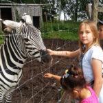 Safari – wycieczka plenerowa