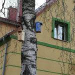 Przyjaciele Przyrody z 1 a informują: Gdy budki lęgowe już wiszą na drzewach…