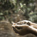 pH metr glebowy – jak sprawidzć i zmienić odczyn pH gleby
