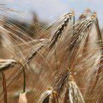 Najpopularniejsze rodzaje przenośników rolniczych