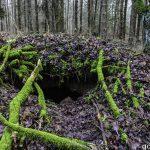 Tajemnice tego lasu wciąż czekają na odkrywców