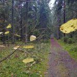 Pielęgnujemy las Kumiecie