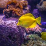 Akwarium morskie – co warto wiedzieć przed założeniem?