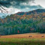 Odkryj piękno jesieni w górach